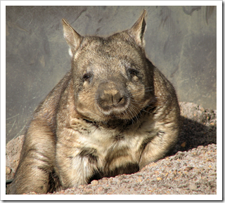 In honor of Wombat Wednesday